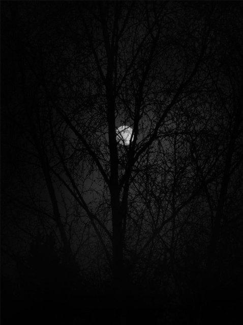 Midnight_Mist