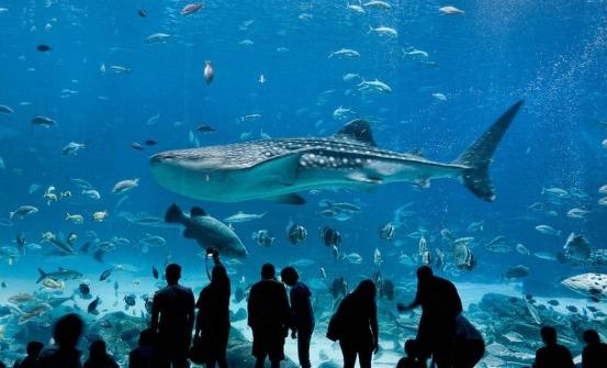 georgia-aquarium-7[10]