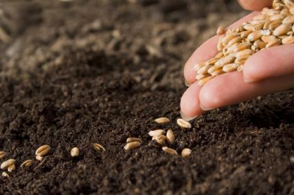 Planting-Seeds