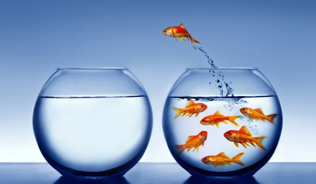 fish_jumping_out_of_bowl-other