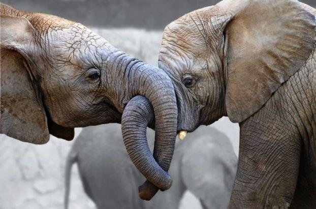 funny-elephant-65