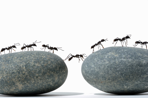 ants-moving-together2
