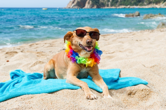 relaxing-dog-at-the-beach.jpg